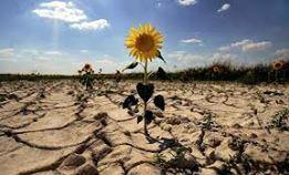 El Impacto Ambiental De Las Poblaciones Humanas Plants Outdoor Farmland