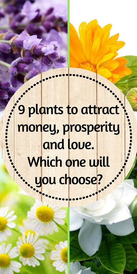 9 plants to attract money, prosperity and love  Which one
