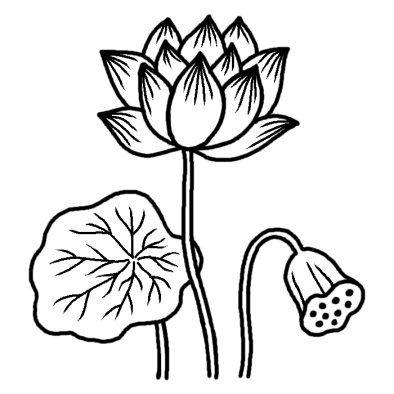 ハス1 夏の花 無料 白黒イラスト素材 蓮 イラスト 花のスケッチ 蓮の絵