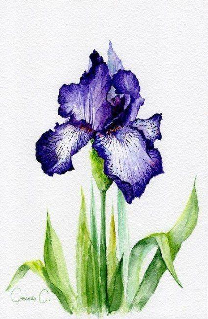 New Flowers Art Painting Purple Iris 18 Ideas Watercolor Flowers Paintings Flower Art Painting Watercolor Flowers