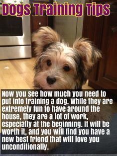 Pin By Dog Lovers Hub On Dog Lovers Hub Dogs Easiest Dogs To Train Dog Training Tips