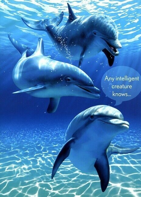 Tree-Free Greetings - Christmas 2020 You Intelligent Creature   Dolphins   Tree Free Greeting Card
