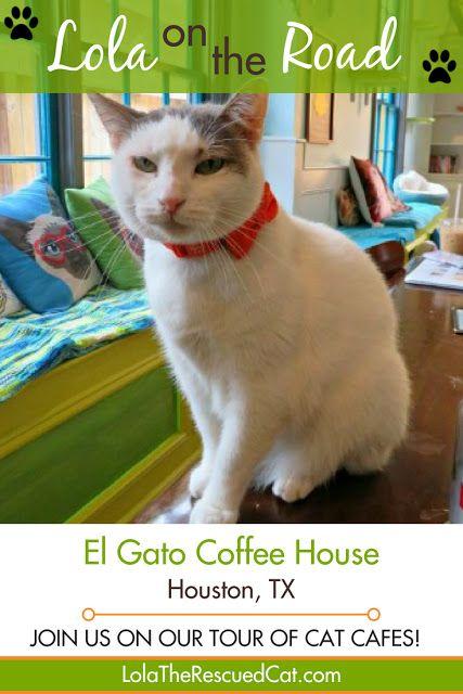 Lola On The Road El Gato Coffee House Houston Tx Cat Cafe Gatos Coffee House