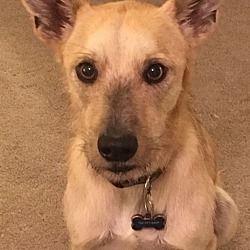 Pet Card Dachshund Adoption Pet Adoption Pets