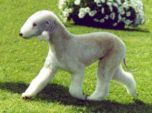 見たこと無いかも 激レア犬種まとめ20 犬好き必見 Naver まとめ Unique Dog Breeds Hypoallergenic Dog Breed Dog Breeds