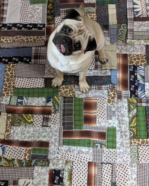 Pug head tilt on a crazy quilt... #pugoftheday #petsofinstagram #dogsofinstagram #pug #pugheadtilt #pugs #fawnpugs #crazyquilt #quilting #handmadequilt #bertjethepug #twogirlsandapug #mopshond #pugeyes #puglife #puglover #quilts #dutchpugs