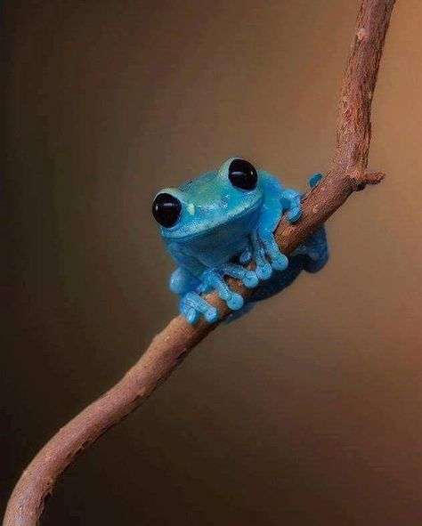 amazingfactsnnature If this little guy doesn't make you smile, I don't know what will.