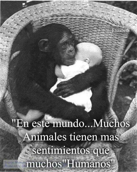 En este mundo, muchos animales tienen mas sentimientos que los humanos.