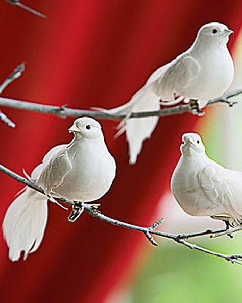 14 Doves Ideas Beautiful Birds White Doves Pet Birds