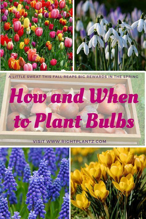 Types Of Urban Gardening - Urban Gardening Daffodil Bulbs, Tulip Bulbs, Bulb Flowers, Rare Flowers, When To Plant Bulbs, Trees To Plant, Fruit Trees, Autumn Garden, Spring Garden
