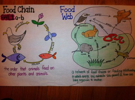 Fourth Grade Food Chains Google Search Fourth Grade Science