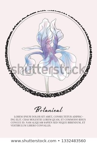 Iris Flower Watercolor Decoration Botany Spring Summer Art Floral Design For Cosmetics Perfume Beauty Care Produ Iris Flowers Watercolor Flowers Summer Art