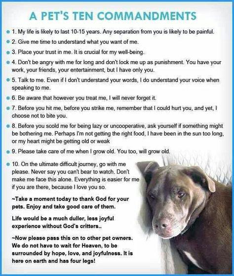 A Pet S Ten Commandments Pets I Love Dogs Dog Life