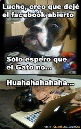 Memes Chistosos De Gatos Y Perros 1 Memes Divertidos Memes Chistosisimos Memes Graciosos
