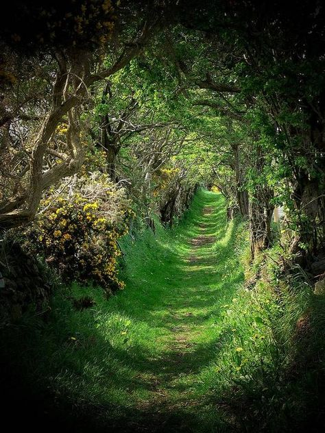 Tree Tunnel, Nature Aesthetic, Aesthetic Fashion, Ireland Landscape, Fantasy Landscape, Fantasy Art Landscapes, Forest Landscape, Green Landscape, Aesthetic Pictures