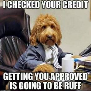 Do You Think Your Credit Is Great Credit Creditrepair Dogs Creditrepairworkfromhome Mortgage Humor Credit Repair Credit Repair Companies