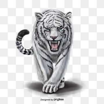 Animal Elements Of Ferocious White Tiger Animal Ferocious Hand Painted Png Transparent Clipart Image And Psd File For Free Download White Tiger Cat Background Animal Clipart