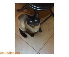 Gatos Machos Perdidos Espana Santa Cruz De Tenerife