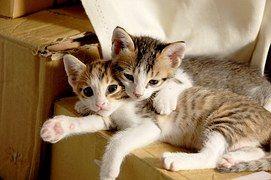 Free Image On Pixabay Cat Kitten Cute Kittens Small Cute Kitten Gif Kittens Cutest Cute Cats