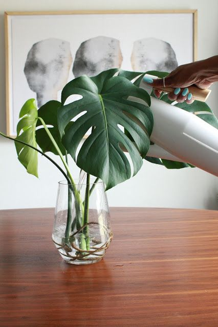 Good To Know How To Propagate A Monstera And Other Care Tips Carmeon Hamilton Monstera Plants Pretty Plants