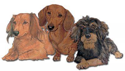 Dachshund Wooden Magnet Dachshund Dachshund Dog Dogs