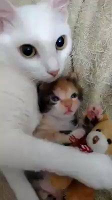 Awww Cute kates - Kittens - Ideas of Kittens #Kittens -  Mother and child reunion  The post Awww Cute kates appeared first on Cat Gig.