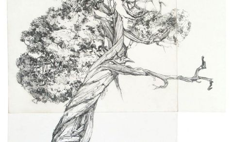 Tree Drawings – Erika Osborne