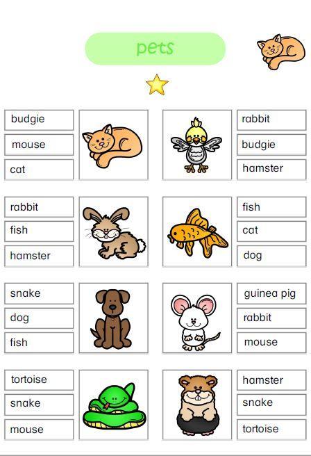 Englisch In 2020 Englisch Grundschule Pets