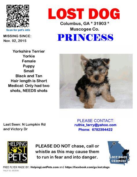 Lost Dog Yorkshire Terrier Yorkie Columbus Ga United States