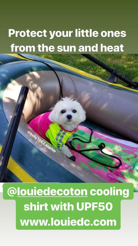 Chill Seeker Dog Cooling Vest With Images Dog Cooling Vest