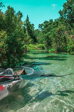 Kayaking Rock Springs in Clear Kayaks! – Tripping with my Bff Places In Florida, Visit Florida, Florida Vacation, Florida Travel, Vacation Places, Vacation Trips, Destin Florida, Florida Springs, Kayak Vacations