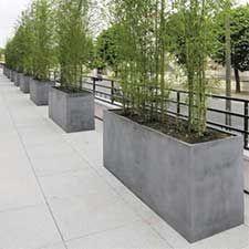 ADig the urban Bamboo screen planters.