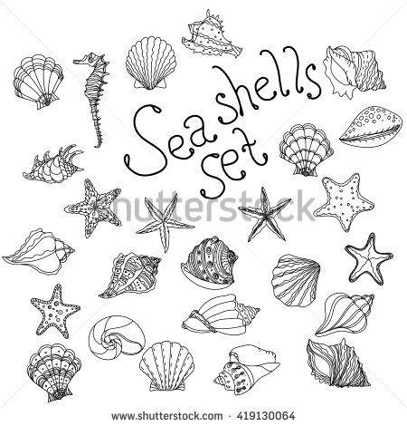 Sea shell, starfish, seashell, nautilus sea fauna ocean aquatic underwater uncolored vector set. Hand drawn marine sea shell marine coloring book style illustration of sea shells on white background.