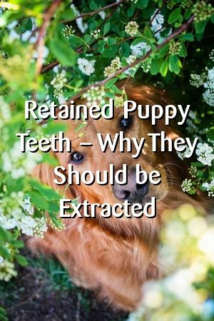 Felicity Mackay Retained Puppy Teeth Why They Should Be
