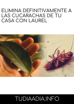 Como Acabar Con Las Hormigas Elimina Definitivamente A Las Cucarachas De Tu Casa Con Laurel