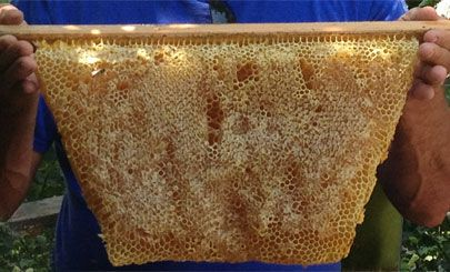 Merveilleux Capped Honey Comb Top Bar Hive | Bees | Pinterest | Top Bar Hive,  Beekeeping And Bee Keeping