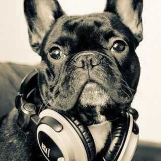 Hipster frenchie-I want my next dog to be a french bulldog!