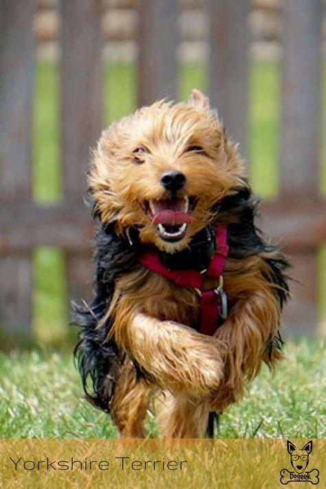 Pin Em Dog Breeds Racas De Cachorro
