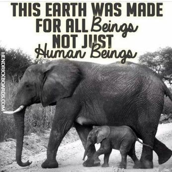 elephants vegan animal rights animal liberation vegetarian compassion vegan quotes choosehopefortheanimals Beautiful Creatures, Animals Beautiful, Mon Combat, Elephas Maximus, Vegan Quotes, Stop Animal Cruelty, Elephant Love, Elephant Facts, Elephant Quotes