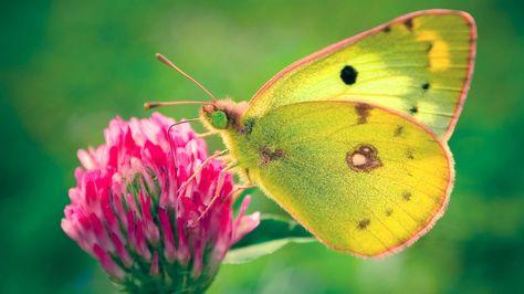 Butterfly Wallpapers Free Download Cute Colorful Hd Desktop