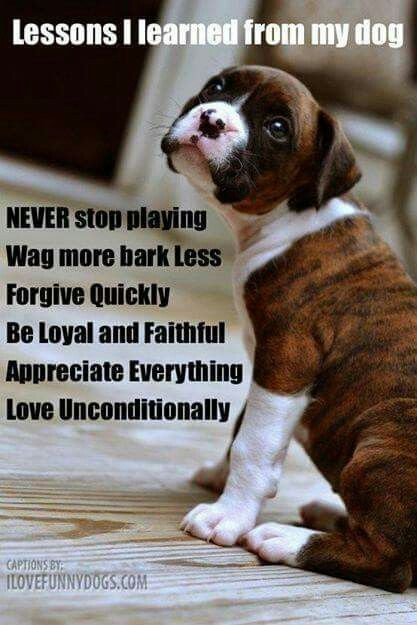 Boxer Dog Quote Boxer Dogs Funny Boxer Dog Quotes Dog Training
