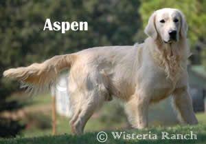 Liebevolle Fci Geschutzte Labradorzucht Im Lcd Unser Ziel Ist Es Gesunde Labradore Mit Typischem Wesen Und Aussehen Zu Zuchten Labrador Zuchten Hunde
