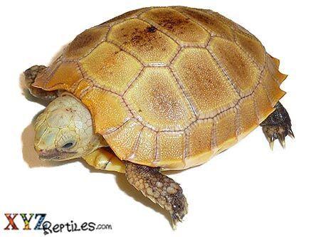 Pin On Tortoises