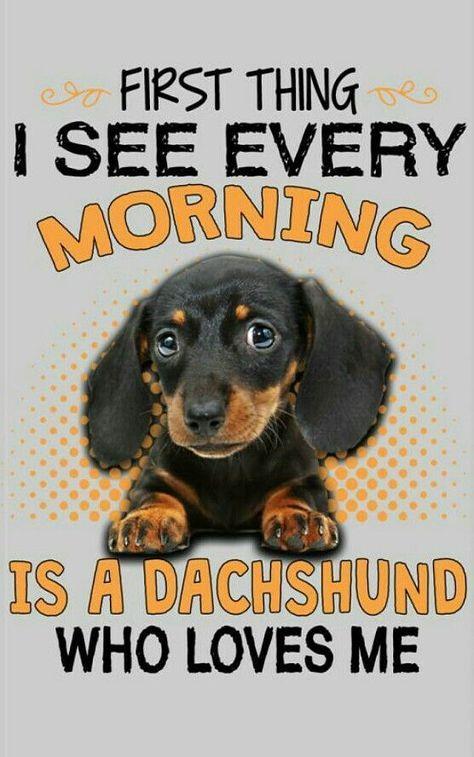 First Thing Each Am I See My Dachshund