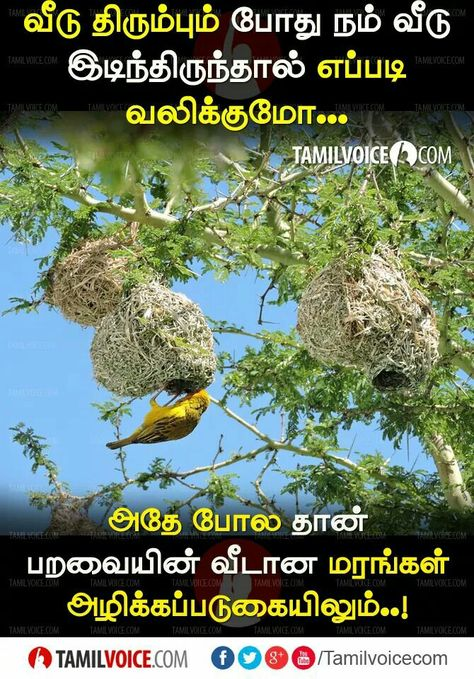 Pin By Devanathan D On Tamil Inspirational Quotes Voice Quotes Life Facts Life Quotes