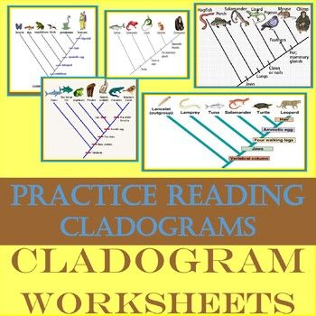Cladogram And Phylogenetic Trees By Brainiac Teacher Teachers Pay Teachers Phylogenetic Tree Task Cards Teachers