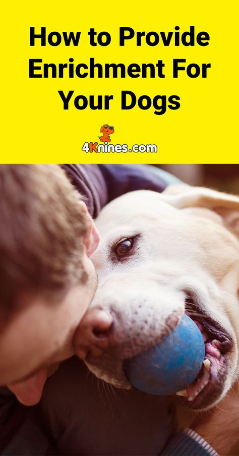 How To Provide Enrichment For Your Dogs Dogs Dog Training