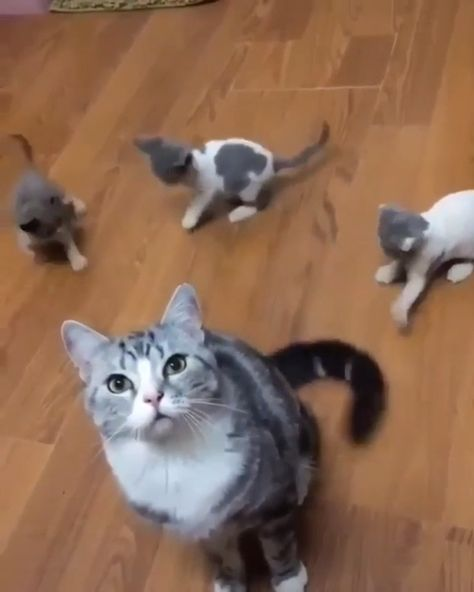Facts About Cats That will Blow your Mind #catlovers #kittens #funnycats #catfacts #cat #cats 🤖