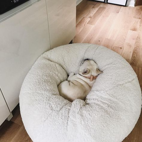 This is like our Wimzy in her beanbag chair ❤️