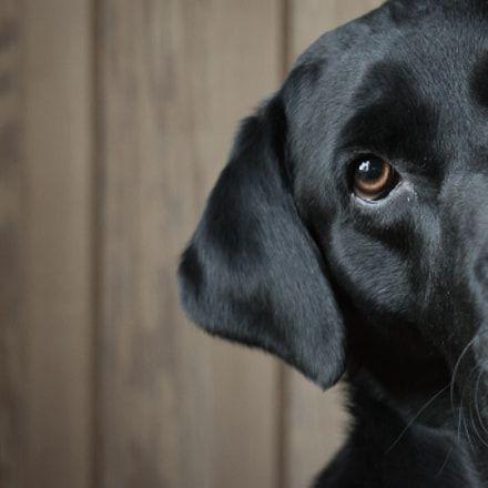 Doggy Dan S Kind Gentle Dog Training Method Labrador Dog Love Dogs